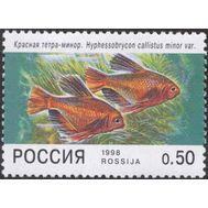 марка Красная тетра-минор